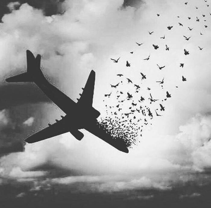Photo of سوگ نامه بوئینگ 737 | پروازی با 176 مسافر که آسمانی شد